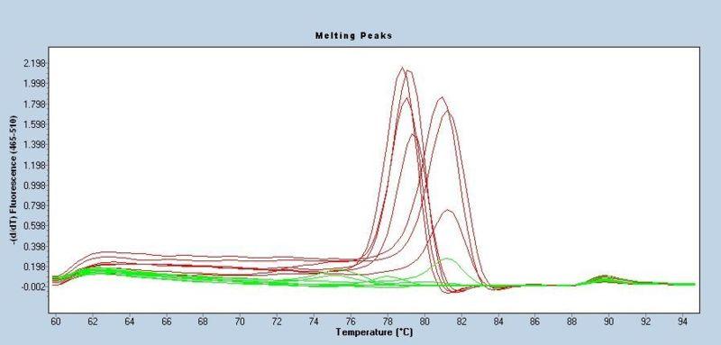 File:WFplatinumteamMC.jpg