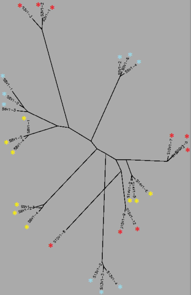 File:Unrooted Tree - Visit 1cc.png