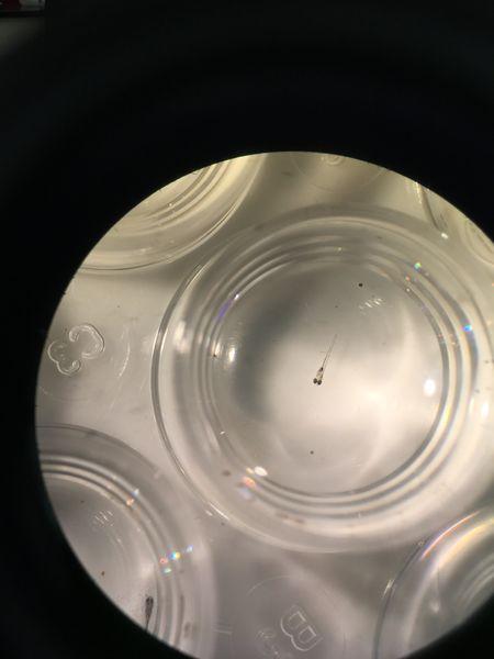 File:Image1379JPG. Bio210 Figure 1