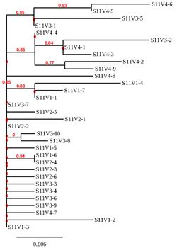Mkphylotreesubject11.JPG