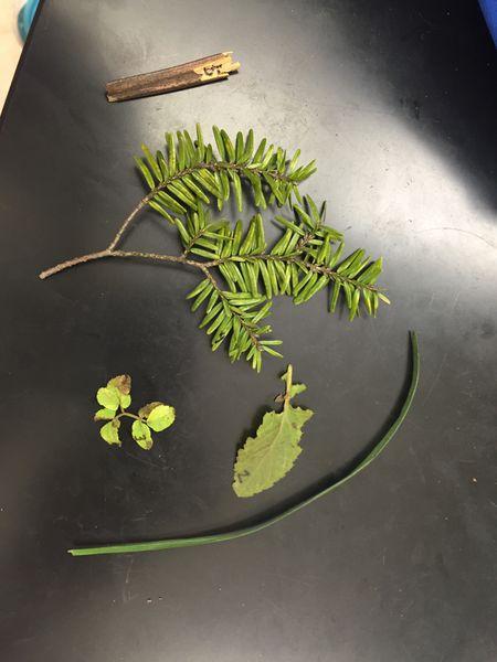 File:Plant 1 Feburary 18.JPG