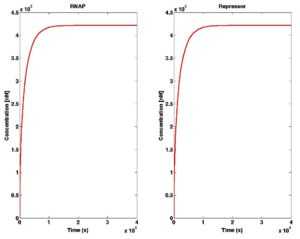 Time Course for RNAP and repressor species in reduced model