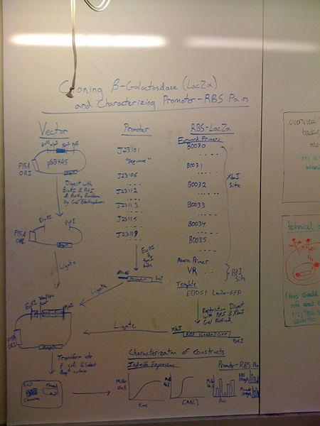 File:Board1.jpg