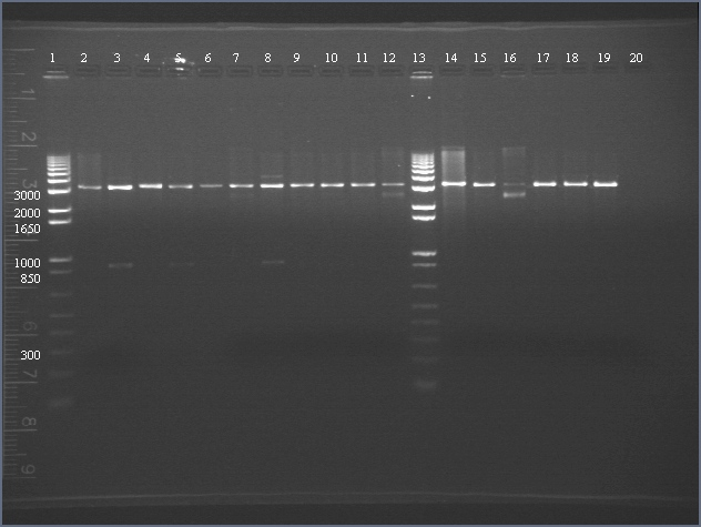 File:2006-8-7 digests of KaiA and KaiB numbered.jpg