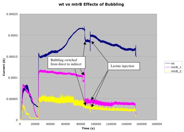 Wt-mtrB-bubbling.png