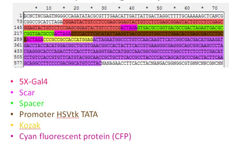 Image:Sequencing Result BD002.png