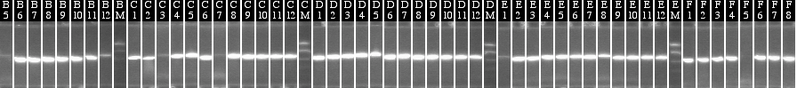 File:9-27 colony PCR MXHTA middle.png