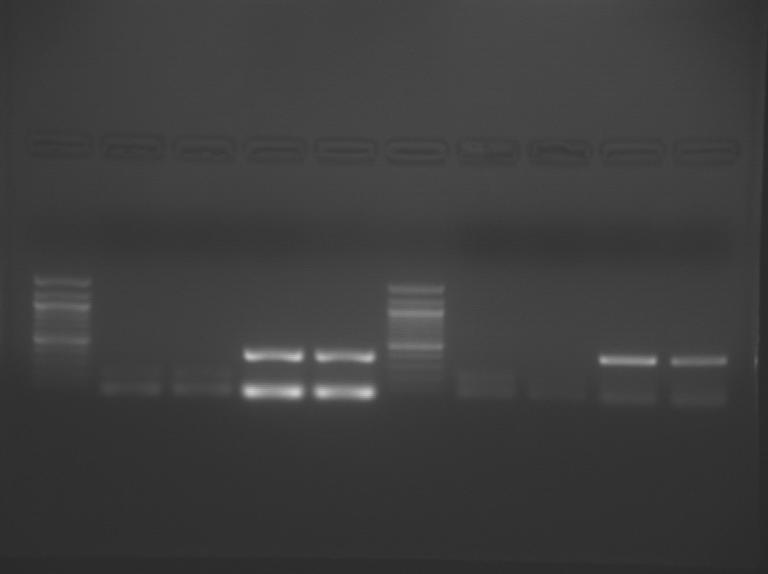 File:S09 M3D5 TR-PnkGrn-0.04.BMP