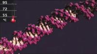DNA BME Lab.png