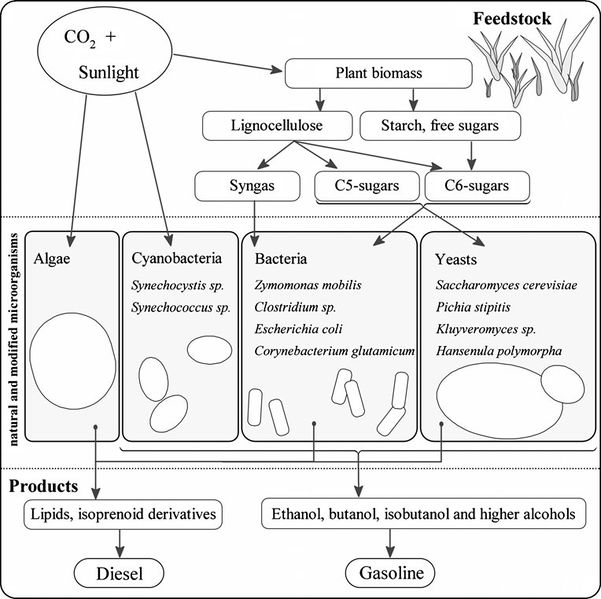 File:CH391L S12 Metabolic engineering site Overview.png