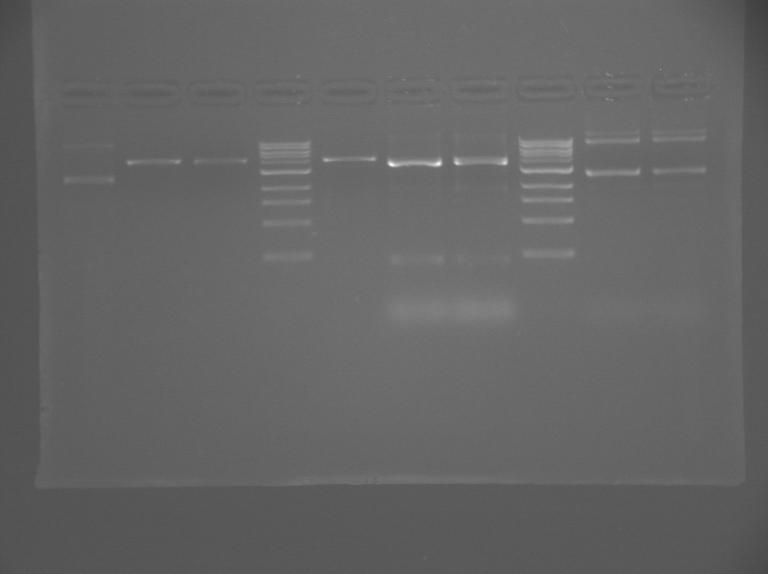 File:S13 M2D5 WF gel-Pink.jpg