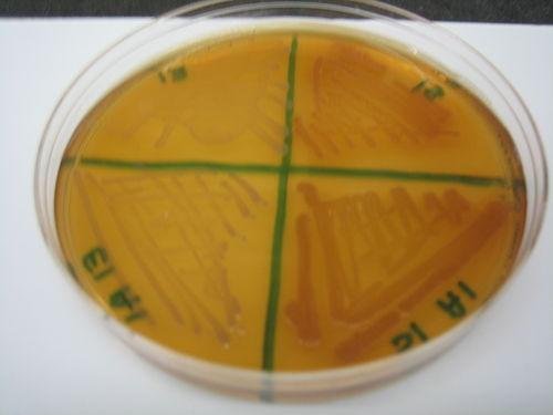 McConkey Plate 6.JPG