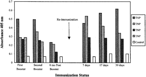 Absorbance readings from ELISA assays. Each shaded bar represents a different mouse. An initial immunization (not shown) and two additional boosters were first given to the mice and their antibody levels were measured. To test for longevity, 8 months were allowed to pass before testing for antibodies again. To test for immunological memory, the mice were immunized a single time and subsequent levels of antibodies in the following days were measured.[9]