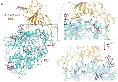 Yan et al. (2020) Figure 4A.png