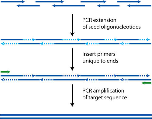 A schematic diagram of PCA