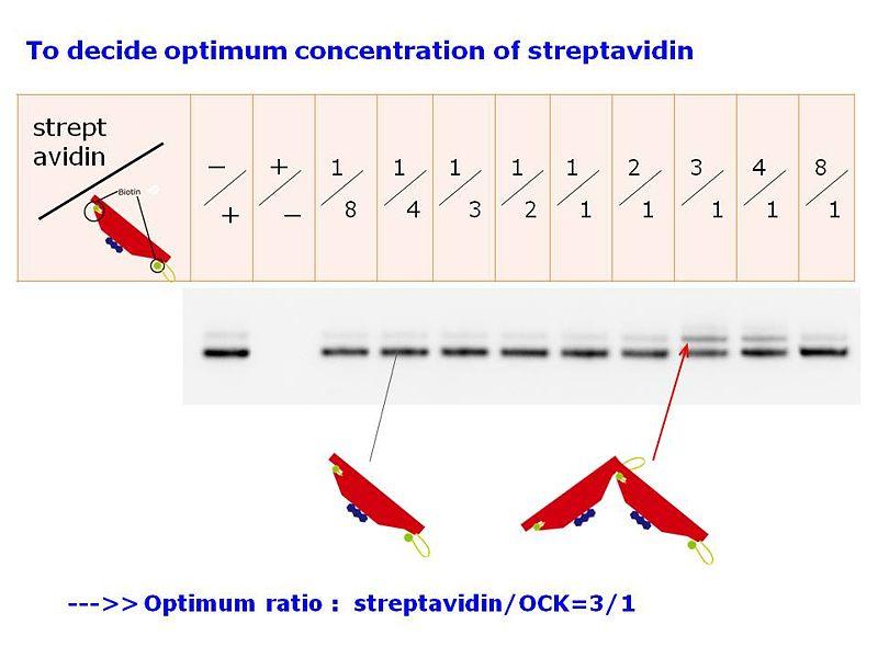 File:Dimerization Optimum SACOnc-Todai.jpg