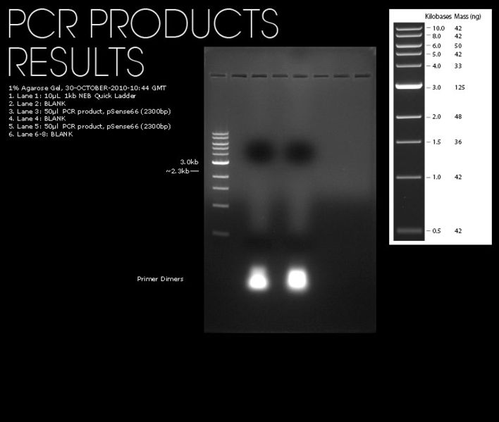 File:30102010-pcr-2300-porduct-noproduct.jpg