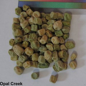 -TM- Opal Creek Seed.jpg