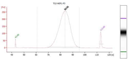 Bioanalyzer WIFL P3.PNG