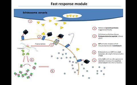 Fast response module.JPG