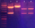 Thumbnail for version as of 16:29, 11 December 2012