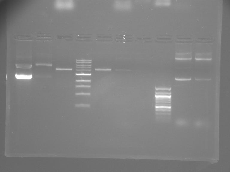 File:S12 M2D5 TR gel-Orange.jpg