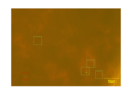 Thumbnail for version as of 08:41, 26 October 2013