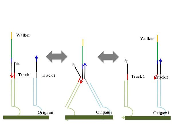 Figure 2 (a). Random walking mechanism from track 1 to track 2