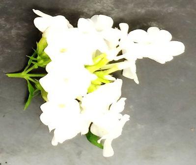 File:White flower.jpg