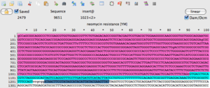 ApE sequence file in text view with feature highlights