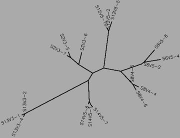 Figure 37:The midvisit tree for the moderate and nonprogressors, generated by CLUSTALW.