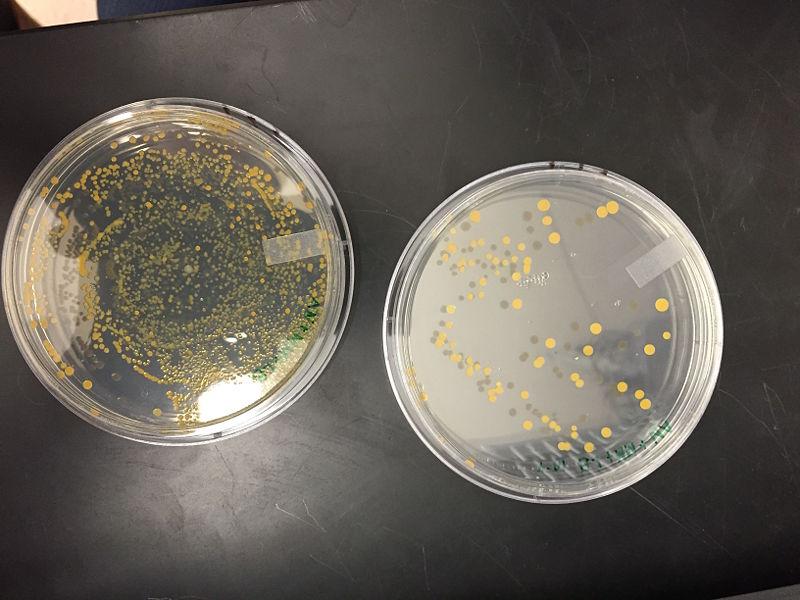 File:1-28 Plate Nutrient 3 5.jpg