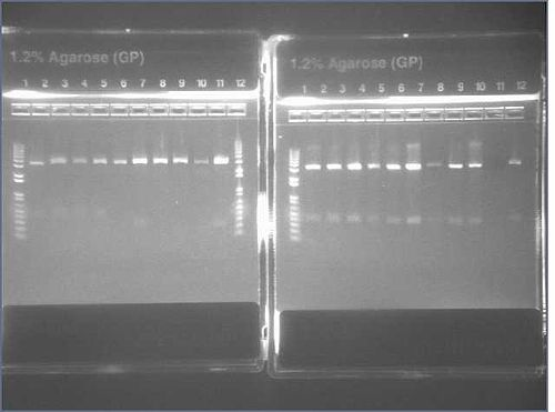 Image of E Gel plates two and one