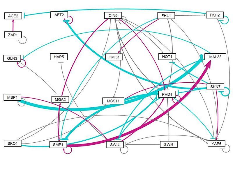 File:All strains weightneg1 network.jpg