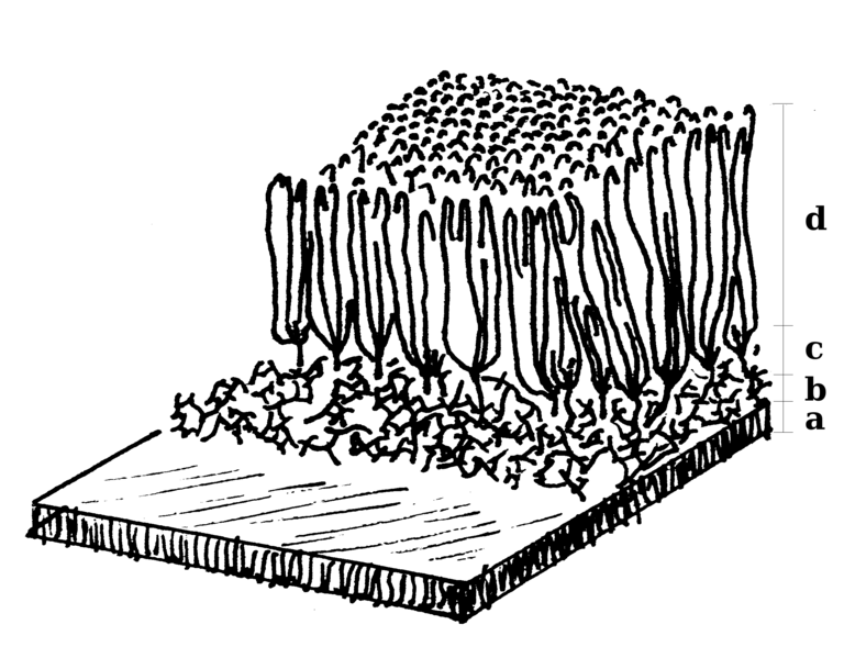 Image:Cell wall diagram.png