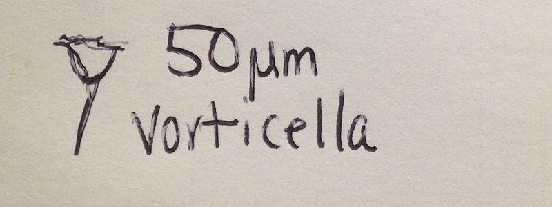 File:Swvorticella.jpg