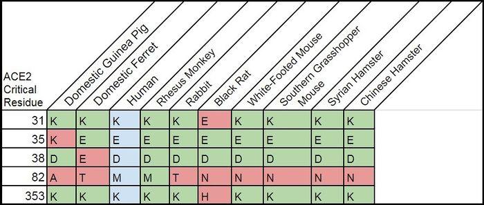 Aiden ACE2 comparasin chart.jpg