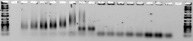 File:Experiment2-3 ribbons1+3.png