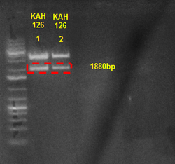 Diagnostic digest of KAH126