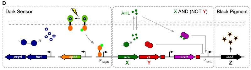 File:S11-M2 Edge-Detector-Circuit.jpg