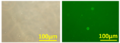 Thumbnail for version as of 22:18, 26 October 2013