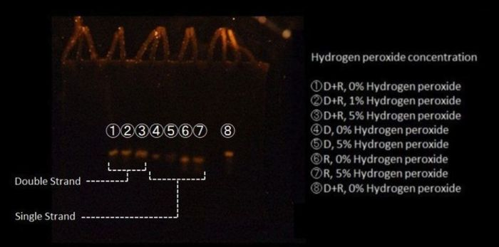 image of DNA hybridization