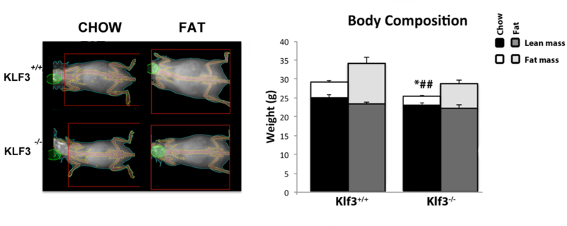 File:Dexa and body comp.png