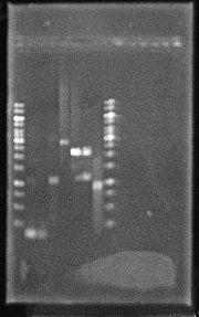 Gel 8Oct2010.JPG