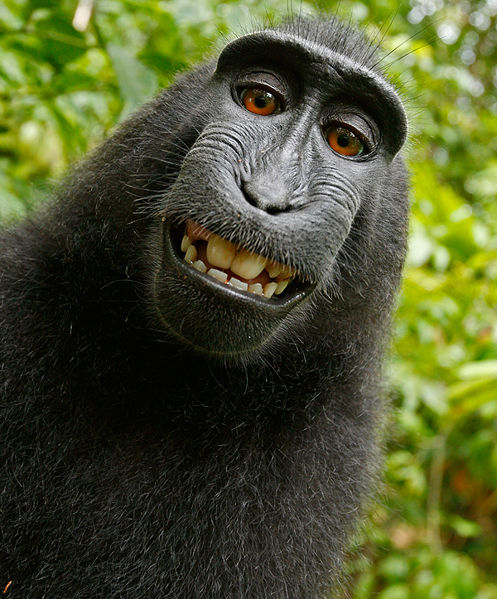 File:Group4Monkey.jpg