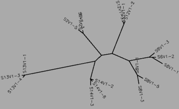 Figure 17:The visit 1 tree for the moderate and nonprogressors, generated by CLUSTALW.