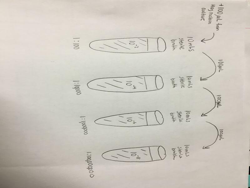 File:Image1084JPG. Bio210 Serial Dilution