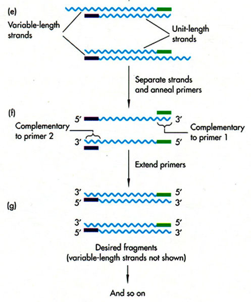 File:PCR Group14.jpg