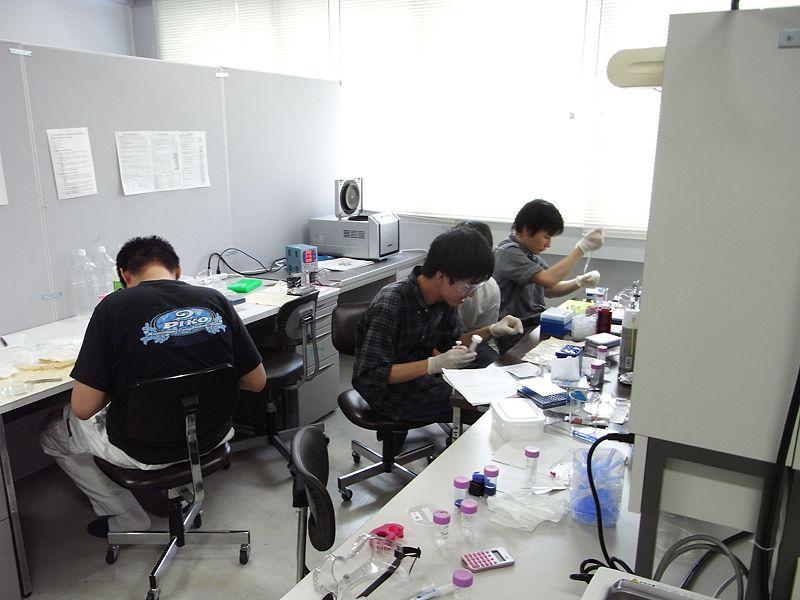 File:Biomod2011 Team Tokyo 0805実験風景.JPG
