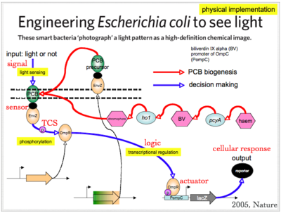 Reengineer E.coli to sense light.png